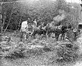US Army mule drawn wagon, Vancouver Barracks, Washington, between 1890 and 1899 (WASTATE 538).jpeg