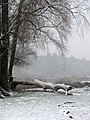 Ukraine Irpen 2010. First snow. By the river Irpen.jpg