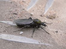 Unidentified species schusch 015 20060429 509 part.jpg