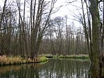 Unterspreewald-Gross-Wasserburger-Spree-01.jpg