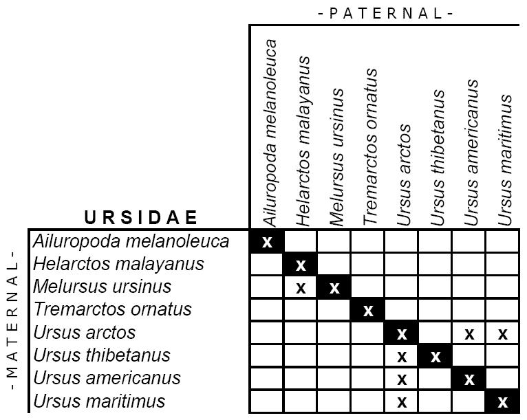 Ursidae hybridisation