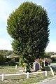 Vacheresses monument aux morts tilleul arbre du souvenir Eure-et-Loir France.jpg