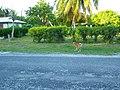 Vaimate - Rangiroa - panoramio (7).jpg