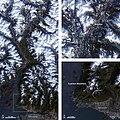 Vancouver tm5 2009340.jpg