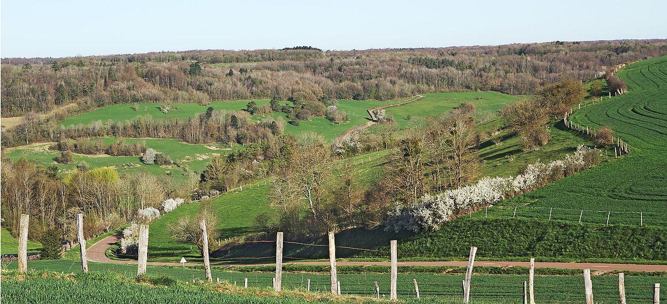 La vallée de l'Ougne à Vaux-Saules vue depuis la côte des Grands Champs sur la route de Cinq-Fonts, route de Val-de-la-Saule sur le versant opposé