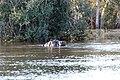 Victoria Falls 2012 05 23 1404 (7421831968).jpg
