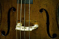 Vienna - Detail of a Violoncello F Holes - 9557.jpg
