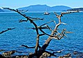 View from Washington Park, Anacortes, WA.jpg