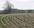View towards Barrowcliffe Farm - geograph.org.uk - 1208274.jpg