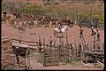 Views at Pipe Spring National Monument, Arizona (e0ef78fe-0af5-4932-ae6e-6d3792c78285).jpg