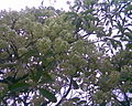 Vilangan Kunnu Image036.jpg