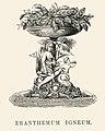 Vintage illustrations by Benjamin Fawcett for Shirley Hibberd digitally enhanced by rawpixel 22.jpg
