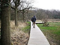 Walking the Board Walk by the Beaulieu River - geograph.org.uk - 381006.jpg