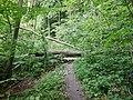 Wanderweg in der Kammer in Scharbeutz - panoramio.jpg