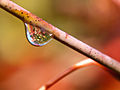 Water Droplet With Flower.jpg