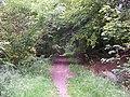 Wendover Woods - geograph.org.uk - 21591.jpg