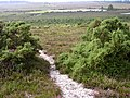 Whitten Bottom from Holmsley Ridge, New Forest - geograph.org.uk - 32749.jpg