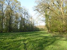 Whittlewood Forest, Say's Copse 5.jpg