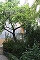 Wien Blutgasse ed 2009 PD 20091007 016.JPG