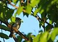 Wildlife birds 16 - West Virginia - ForestWander.jpg