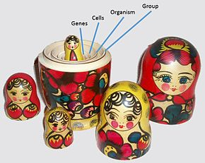 David Sloan Wilson compared multilevel selection to a nested set of Russian dolls