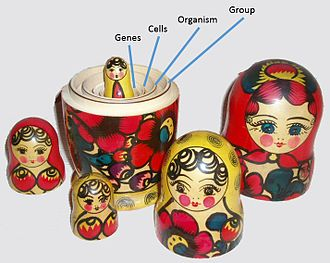 Group selection - David Sloan Wilson and Elliott Sober's 1994 Multilevel Selection Model, illustrated by a nested set of Russian matryoshka dolls. Wilson himself compared his model to such a set.