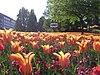 Windmill rose garden, bremen 01.JPG
