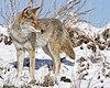 Winter Hunt (15734438472).jpg