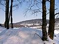 Winter im Teutoburger Wald08.jpg