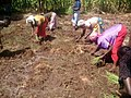 Women Planting Onions 06.jpg