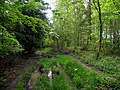 Woodland - geograph.org.uk - 11681.jpg
