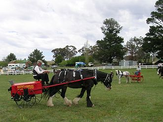 Draft horse showing - Horse drawn fertilizer spreader in an agricultural implements class at Woolbrook, New South Wales