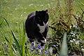 Wraxall 2012 MMB 33 Smudge.jpg
