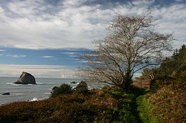 Yurok Loop Coastal Trail at Redwood NP.jpg