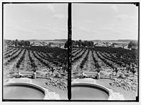 Zionist colonies on Sharon. Borochov. Showing orange culture. LOC matpc.02672.jpg