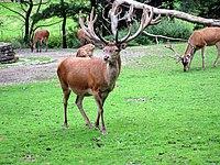 Zoo-Dortmund-IMG 5513.JPG