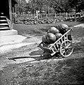 """""""Otroški voziček"""" z bučami. Če je večji mu pravijo šajtrga, Dolenje Gradišče 4, pri Blaževč 1952.jpg"""