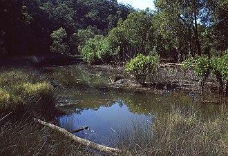 Marramarra National Park - Image: (1)Cobah Creek Marramarra NP