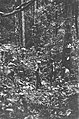, Borneo, Bestanddeelnr 1723-8-6.jpg