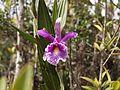 Área de Conservación Municipal Bosque de Shollet, Villa Rica, Pasco, Perú 10.jpg