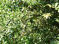 Árvores e trepadeiras 2.jpg