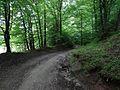 Ścieżka wokół jeziora Jaczno, droga przez las - panoramio.jpg