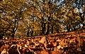 Καστανιές το φθινόπωρο.jpg