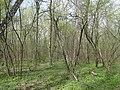 """Апрельский день в парке """"Олимпик"""" - panoramio.jpg"""