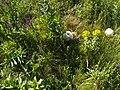Балка Павлівська гриби печериці.jpg