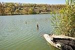 Берег озера неподалік від дендропарку.jpg