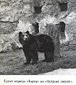 Борец (медведь).jpg