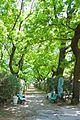 Ботанічний сад ОНУ 06.jpg