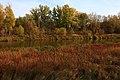 Вид на правый берег Урала - panoramio (6).jpg
