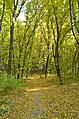 Голосіївський парк імені Максима Рильського6.jpg